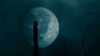 Ravens and big full moon on background - Slo Mo