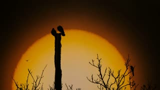Ravens perched on a torture pillar with big apocalyptic sun on background - slo mo