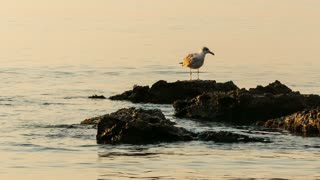 Seagull standing on rocks - CU