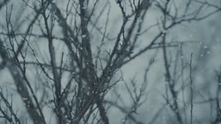 Snow on the branches of a tree - slo mo