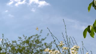 Swallowtail butterfly flying over tree branches with flowers