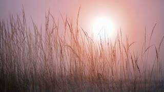 Winter grass with sun