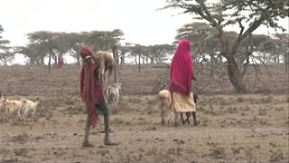 Young boy carrying a sick baby goat, traditional Kenyan goat herders, shepherds walking with their goats in a heat wave, dry bush, drought, Kenya, Africa
