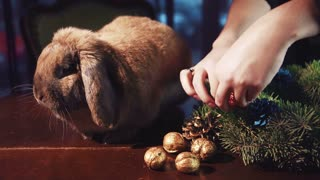 Crop hands close shot of making decorative wreath on table with rabbit sitting near