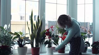 Side view of young blond woman in mint color long sweater watering flowers on window ledge inside home