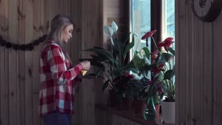 Side view of young woman dusting plant leaves in window at home