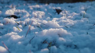 snow on the grass in evening