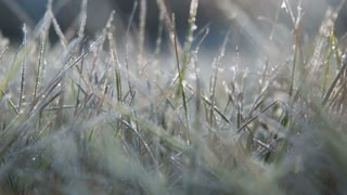The male hand touches to a frosty grass on a background light of the sun