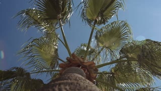 A low angle of view of the palm branches of which are swaying in the wind