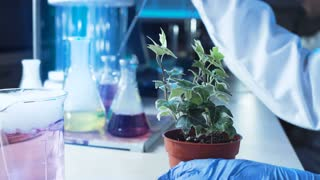 Anonymous person in gloves dropping chemicals in pot with plant while working in lab