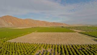 Aerial California Orange Orchards