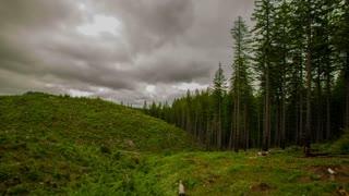 Oregon Deforestation