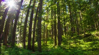 Oregon Lush Forest