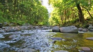 Oregon Small Stream