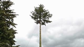 Oregon Tree Cutting