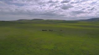Aerial Montana Wild Horses Running June 2017 4K Inspire 2