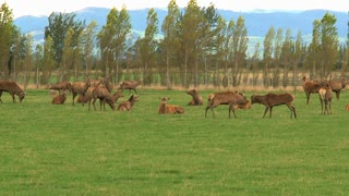 A group deers in New Zealand