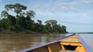 Amazon rainforest View from a boat