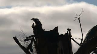 Bird silhouette at Kangaroo island,Australia