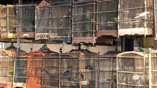 Birds in cage with sound in Bali
