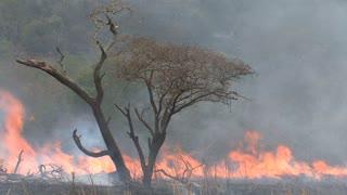 Brush fire burning on the savanna