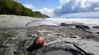 Coconut on the rocks with a tourists walking in the background at Montezuma beach Costa Rica