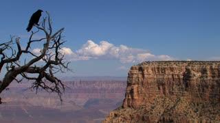 Crow at Grand Canyon,Grand Canyon