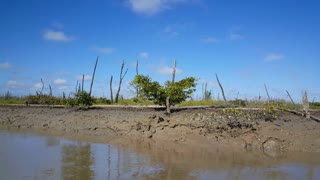 Cruising through a mud river and landscape with death trees in Suriname