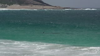 Dolphins riding and jumping a wave along the coast at the Great Ocean Drive, Esperance, Western Australia