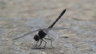 Dragonfly moving his feet and flies away