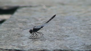 Dragonfly moving his feet