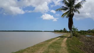 Dyke at the Suriname River in Nieuw Amsterdam Suriname
