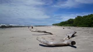 Family walks at Santa teresa beach with big parts of wood in Costa Rica