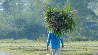 Farmer walks with plants on his head in the Philippines