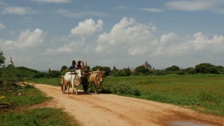 Farmer with cow car and Pagodas on the background in Bagan, Myanmar, Burma
