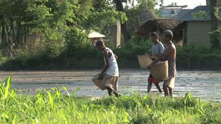 Farmers sowing in Nepal