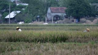 Farmers working at the farm land in Mai Châu