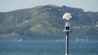 Gull sitting on a lantern in San Francisco