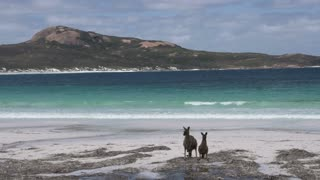 Kangaroos on the beach in Cape Le Grand National Park jumping away