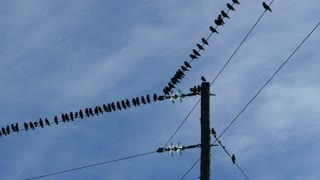 Little birds on an electric pole in National Park of amvrakikos wetlands Greece