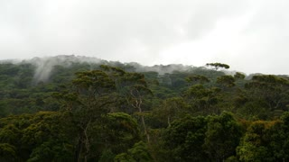 Misty mountain forest in the Sabaragamuwa region, Sri Lanka