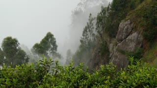 Misty tea plantations mountain view landscape in Sri lanka