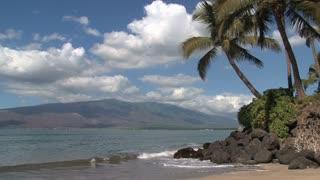 Palm trees at the Beach Maui,Hawaii