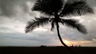 Palmtree and people silhouette during sunset at Jaco beach Costa Rica
