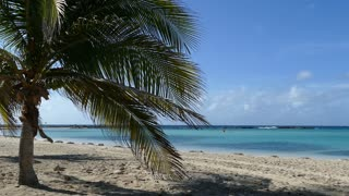 Palmtree at Baby Beach on Aruba