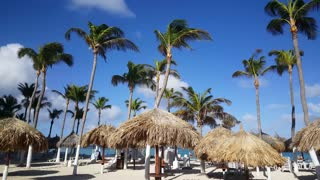 Palmtrees and Beach Umbrellas at Palm Beach on Aruba