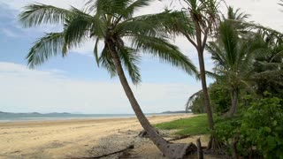 Pan from Mission Beach with palm tree and dunk island at the background