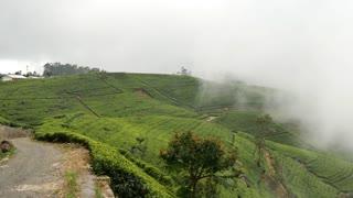 Pan from misty tea plantations mountain view landscape in Sri lanka
