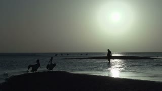 People and Pelicans on the beach during sunrise in Monkey Mia SharkBay National Park