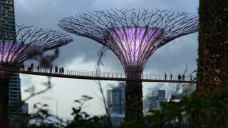 People walking at the Supertree Grove with purple lights at Gardens by the Bay in Singapore